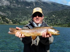 Brown trout in Chile